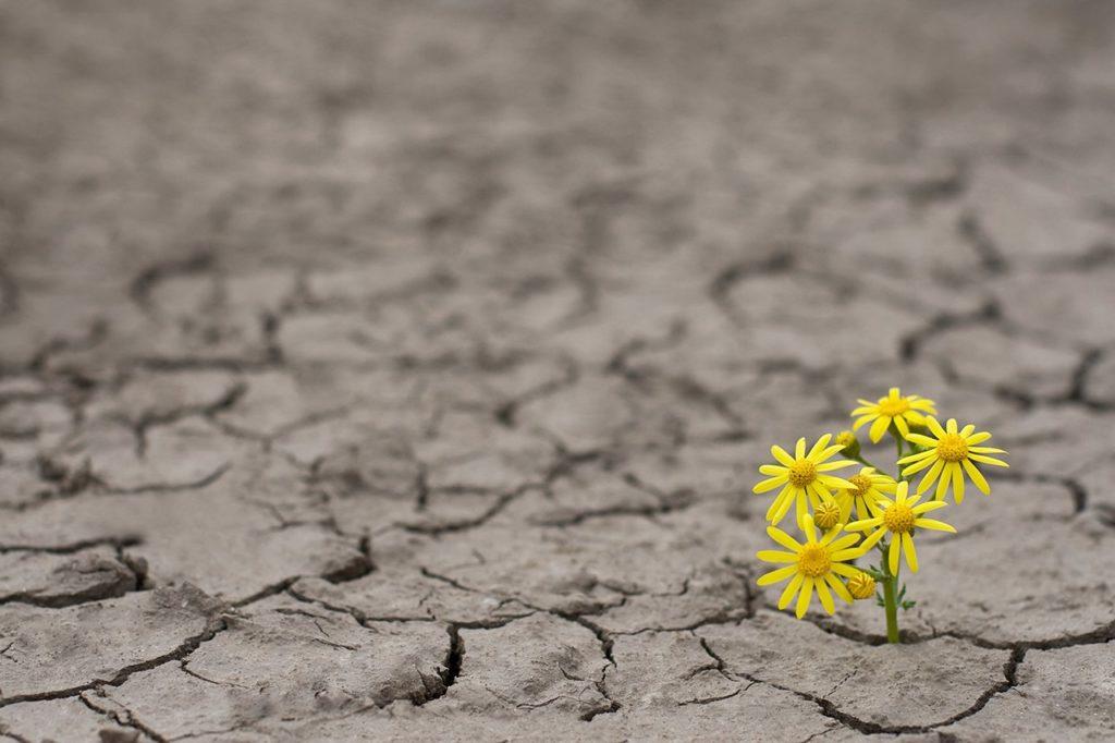 Resiliencia e Terapia